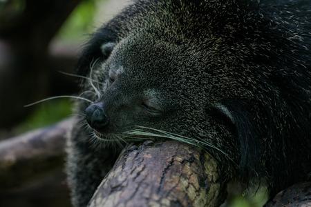 likes: The Bears likes to sleep