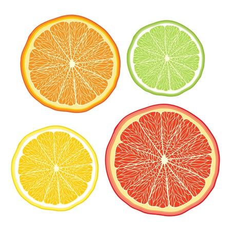 grapefruit juice: Vector stylised orange, lemon, grapefruit, lime on white background