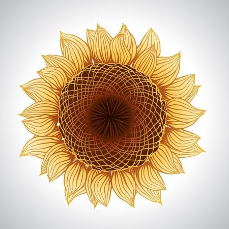 Vector sunflower isolated Vector