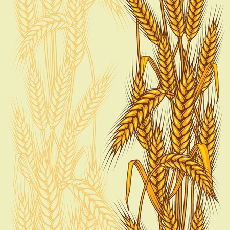 wheat illustration: Abstract textured wheat field  Seamless pattern  Vector