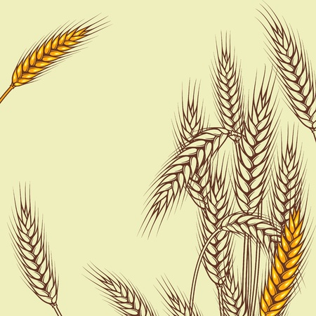 wheat grass: Background with ripe yellow wheat ears, vector illustration