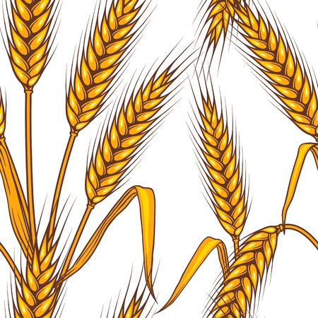 cereal plant: Abstract textured wheat field  Seamless pattern  Vector