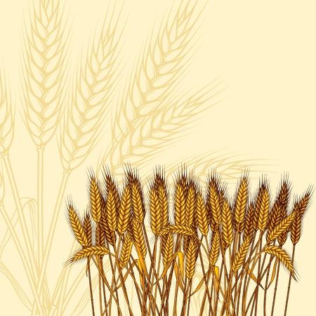 wheat crop: Fondo con espigas de trigo maduro amarillo, ilustraci�n vectorial