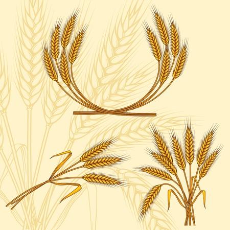 ear corn: Fondo con espigas de trigo maduro amarillo, ilustraci�n vectorial