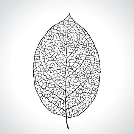 Black macro leaf natural isolated Illustration