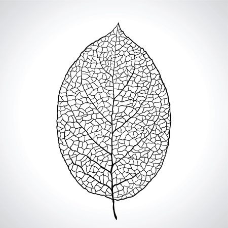 Black macro leaf natural isolated Stock Vector - 13397149