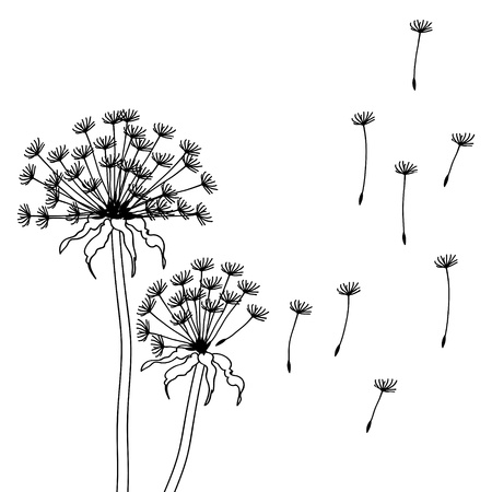 Dry dandelion flowers - abstract illustration Vector