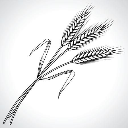espiga de trigo: Maduras espigas de trigo negro, ilustración,