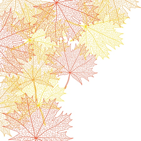 Autumn macro leaf of maple bacground  Vector