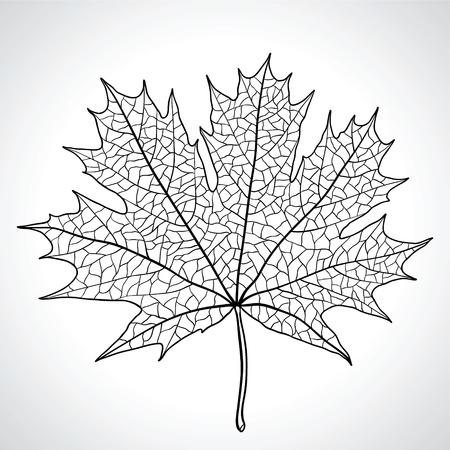 Hoja de arce, símbolo de la naturaleza, monocromo