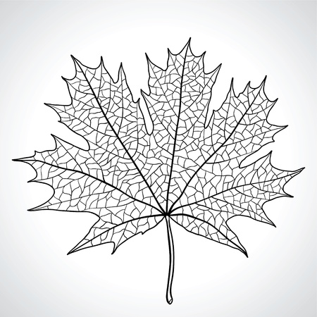tree outline: Leaf of a maple, nature symbol, monochrome Illustration