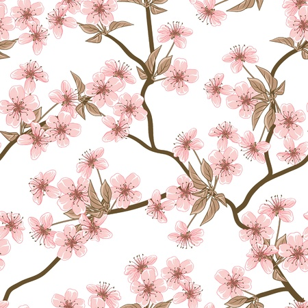 cherry blossom tree: Cherry blossom background   Seamless flowers pattern  Illustration