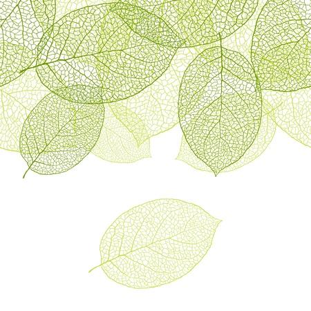 Fresh green leaves background - illustration Stock Vector - 13635555