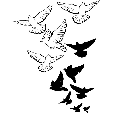flock of birds: Flying pigeons background  Hand drawn