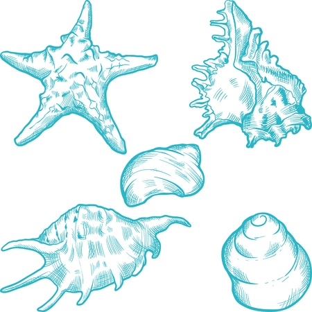 Sea shells and star  Hand drawn illustration in vintage style  Vector