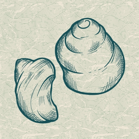 Sea shell  Original hand drawn illustration in vintage style  Vector