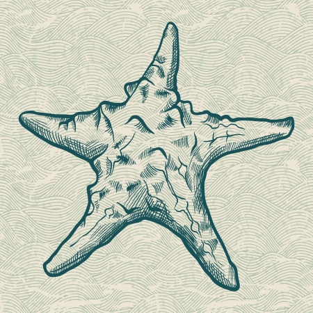 mollusk: Sea star  Original hand drawn illustration in vintage style  Illustration