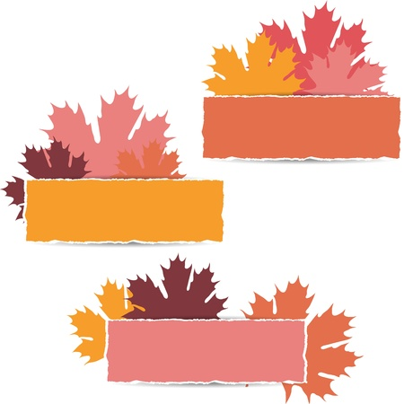 Autumn maple leaves design  Vector illustration  Vector