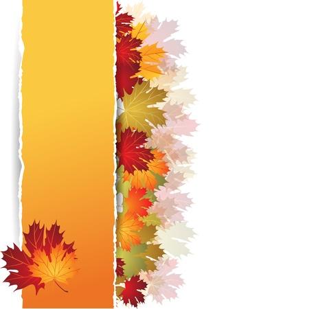autumn leaf frame: Oto�o hojas de arce de fondo