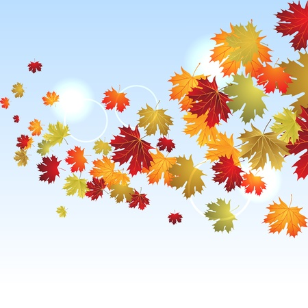 EPS10 Autumn maple leaves background  Vector illustration  Stock Vector - 14751490