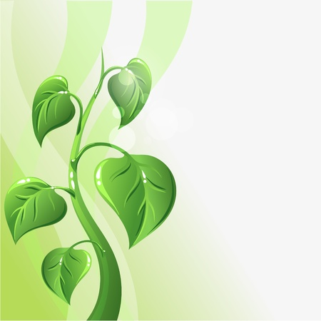 seedling growing: Green sprout with leaves and copyspace for your text