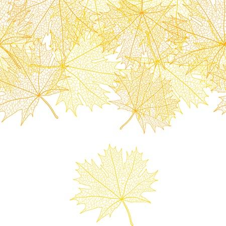 macro leaf: Autumn macro leaf of maple  background