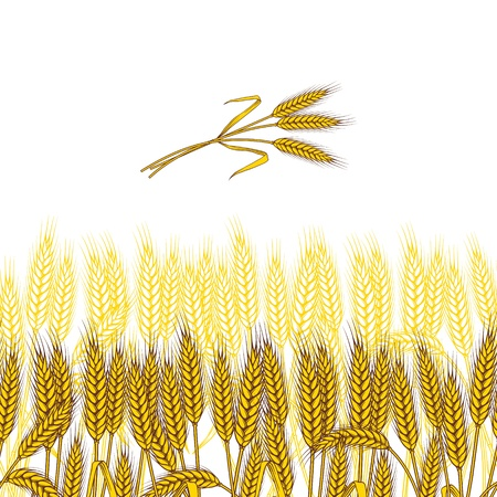 golden field: Background with ripe yellow wheat ears, vector illustration