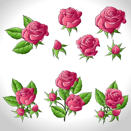Big set of a beautiful colored roses  illustration  Vector