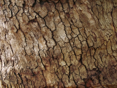 Tree bark background texture pattern  photo