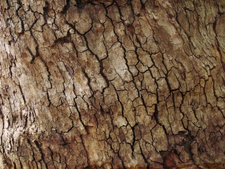Tree bark background texture pattern Stock Photo - 17160946