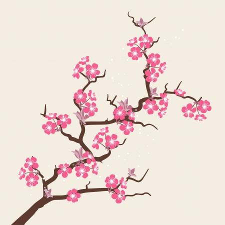 fleur de cerisier: Carte avec des fleurs stylis�es de fleurs de cerisier