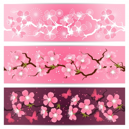 Cherry blossom flowers banner set  Vector