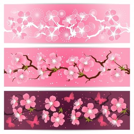 flores cerezo: Flor de cerezo flores bandera conjunto