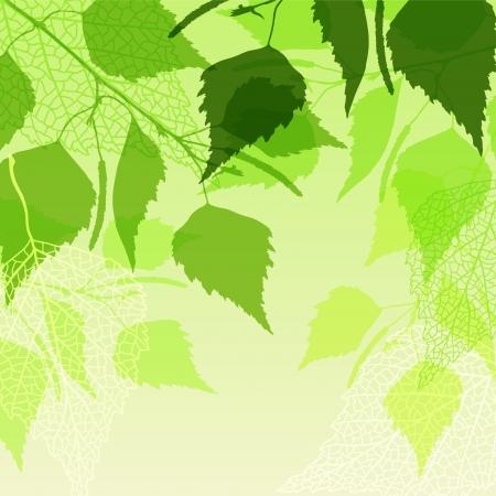 Fresh background of  green birch leaves  Illustration