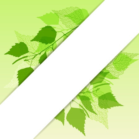 Fresh background of  green birch leaves  Stock Vector - 17345384
