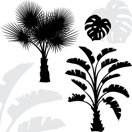 coconut palm: Palm trees black silhouettes on white background  Illustration