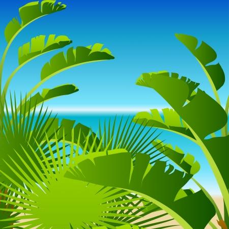 subtropical plants: Tropical palm on sea background