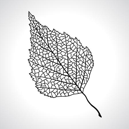 macro leaf: Black macro leaf of birch tree isolated