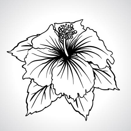 rose: Black macro chinese rose flowers isolated