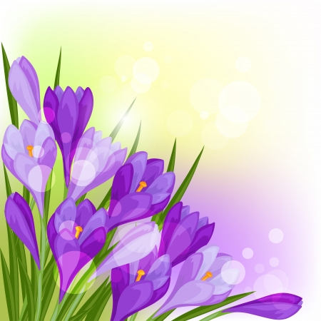Spring flowers crocus natural background. Vector
