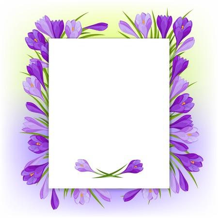 fondo natural: Flores del azafr�n de fondo natural.