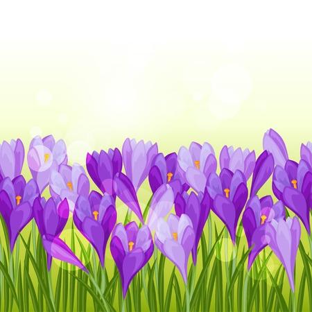 Spring flowers crocus seamless pattern horizontal border. Vector