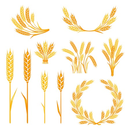 barley field: Cereal collection elements for design.