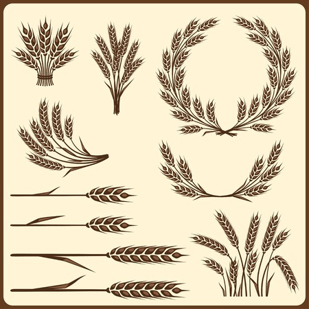 Elementi di raccolta di cereali per la progettazione. Vettoriali