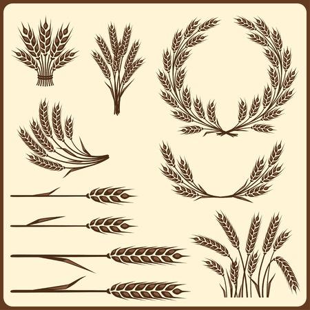 cebada: Los elementos de recogida de cereales para el diseño.
