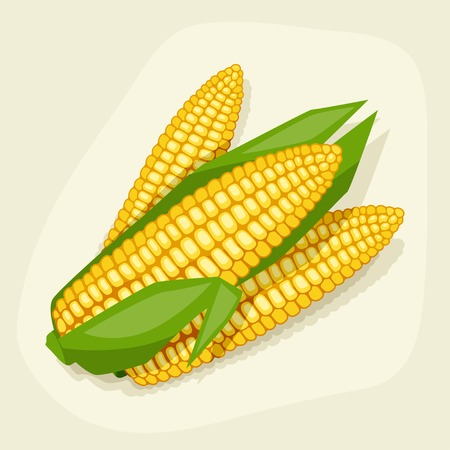 Stylized vector illustration of fresh ripe corn cobs  Vector