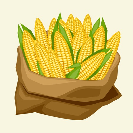maize: Illustration of stylized sack with fresh ripe corn cobs