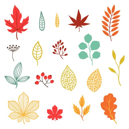 Set of various stylized autumn leaves and elements