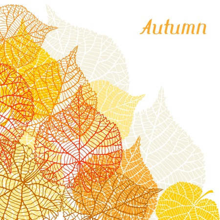 leaf vein: greeting card with stylized autumn leaves