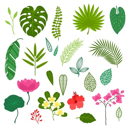 Set of stylized tropical plants, leaves and flowers. Vector